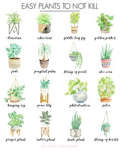 Here's your guide for how to get started with house plants! With ideas for house plant decor, tips to keep plants alive and easy plants to not kill. bedroom plants How to Get Started With House Plants - at home with Ashley Easy House Plants, House Plants Decor, Indoor Plant Decor, Indoor House Plants, Dorm Plants, Easy Care Indoor Plants, Bedroom Plants Decor, Living Room Plants, Indoor Cactus