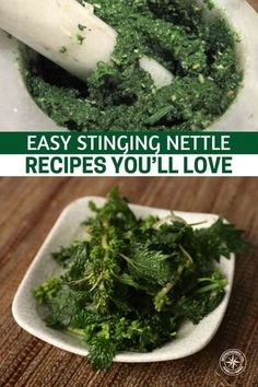 Easy Stinging Nettle Recipes You'll Love - This is an article about using the stinging nettle as a food. This should be the year that you start foraging and you will enjoy these foods almost as much as your body does! Whatever you do make sure you pack a pair of sturdy gloves. #allnatural #naturalremedy #homeremedy #remedy #stingingnettle #stingingnettlerecipes #homestead