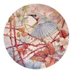 Shadowscapes - The Art of Stephanie Law - Unafraid of thorns - bird watercolor painting and drawing artwork