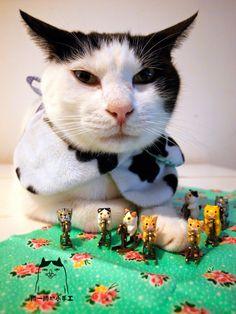 畢幸不幸轉轉轉: 幸福貓咪。小木馬~咪咪