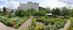 BERLIN, die Prinzessinnengärten  sind Berlins wohl bekanntestes Urban Gardening Projekt und steht am Moritzplatz, mitten in Kreuzberg. In den Prinzessinnengärten wächst, blüht und summt es - dank vieler fleißiger Nachbarn. visitBerlin.de