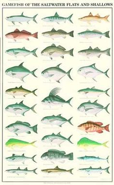 Saltwater Flyfishing Fish Chart. $19.95