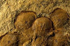 Controversy Blooms Over Earliest Flower Fossil
