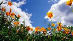 spring flowers - - Yahoo Image Search Results