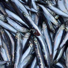 ALICI... Pesce azzurro