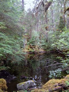 Scenic spot on the Herbert Glacier trail