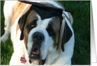Graduation-Cap and Gown-Dogs-Saint Bernard Card by Greeting Card Universe. $3.00. 5 x 7 inch premium quality folded paper greeting card. Animals / Pets cards for the whole family are available at Greeting Card Universe. We will mail the cards to you or direct to your loved ones. Send a paper Animals / Pets card from Greeting Card Universe this year. This paper card includes the following themes: Graduation, Animals, and Cap and Gown. Dogs cards from Greeting Card Universe ca...