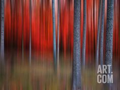 Gimick Photographic Print by Philippe Sainte-Laudy at Art.com