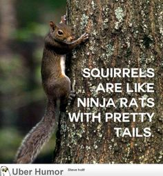 Daily Morning Epicness (40 Pictures) | Funny Pictures, Quotes, Pics, Photos, Images. Videos of Really Very Cute animals.