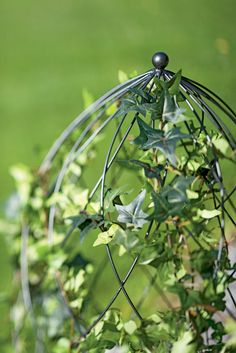 Wire frames make it fast and easy to transform simple vines into stunning works of living art. Three sizes, from 8 to 14 inches in diameter. Garden Trellis, Outdoor Gardens, Colorful Plants, Landscape Design, Nature Garden, Backyard Landscaping Designs, Landscape, Topiary, Urban Garden