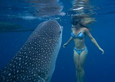 whale sharks - Google Search