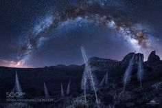 Ghost flowers under the starlights (Isabella Tabacchi / Carpi / Italy) #ILCE-7 #landscape #photo #nature
