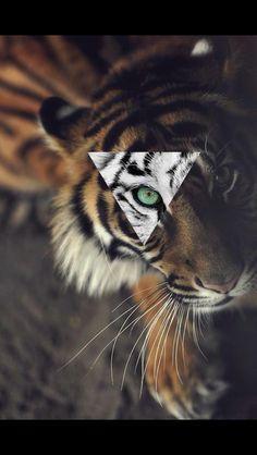 What a cute tiger,isn't it?