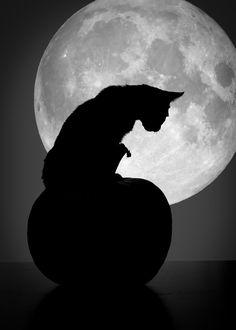 Black cat on top of a pumpkin at full moon. #PANDORAloves #Halloween