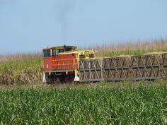 Loading cane at a farm near Proserpine
