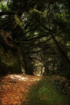 madeira by Veselin Malinov, via 500px    dark and kinda scary, like a path into a witchy wood