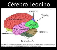 Cerebro Leonino