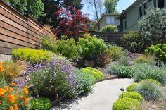 oakland ca drought tolerant garden - Google Search
