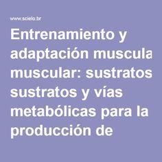 Entrenamiento y adaptación muscular: sustratos y vías metabólicas para la producción de energía