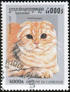 Cambodia 1997 Cat Stamps - Scottish Fold