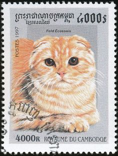 Cambodia 1997 Cat Stamps - Scottish Fold