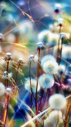 I've always thought dandelions were pretty...