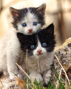 two cute kittens so cute for cat lovers #catandkittens