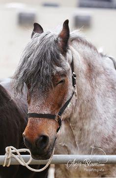schreiben und fotografieren: Pferdemarkt in Laichingen – Ostermontag 2015