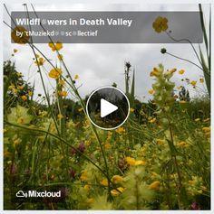 De Muziekd☼☼s: Wildfl☼wers in Death Valley