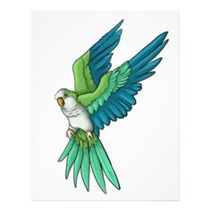 quaker parrot illustration