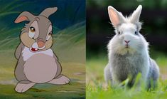 Disney sidekicks and their real life counterparts: http://di.sn/fWV
