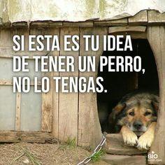 Perro. Si esta es tu idea de tener un perro ...no tengas por favor! Ya basta de maltrato animal!