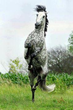 Neat rear!
