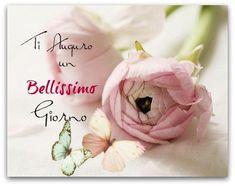 Italian Memes, Good Morning World, Flower Quotes, Happy Day, Fate, Night, Den, Studio, Board