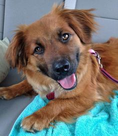 Ginger the Mixed Breed