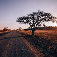 Dundee, My Eyes, South Africa, Grid, Campaign, Wanderlust, Country Roads, Journey, The Incredibles