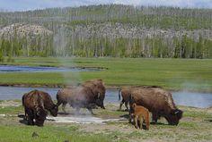 Yellowstone National Park, Wyoming, Montana and Idaho