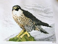 Peregrin Falcon | Flickr - Photo Sharing!