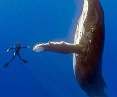 high fin...uh..whatever you are, says whale