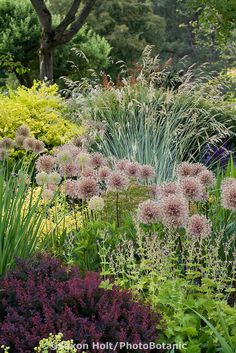 Plant tapestry of ornamental onions seedheads (Allium), grasses, perennials, and shrubs in waterwise drought tolerant mixed border demonstration garden at Bellevue Botanic Garden, near Seattle Washington