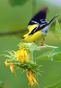 Warbler Bird