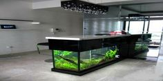 According to fengshui fish in the house is a sure gateway to fortune and have an extraordinary positive influence on your finance. Sager Fish Aquarium is your source for aquarium supplies. You will get all types of fishes, fish food to filters, heaters to aquarium lighting; we have exactly what you need for your home and office aquarium.We recognize the importance of establishing strong and long-lasting relationships with the customers.