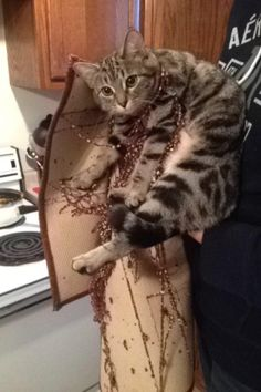 Catsthe reason we cant have nice things. by bloomingOrchids1 cats kitten catsonweb cute adorable funny sleepy animals nature kitty cutie ca