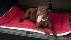 Many dog owners take their canines along on camping trips. Most all pets enjoy the freedom and activity of the outdoors. Here are some tips to help your camping trip to go smoothly for you and your dog. Dog Beds For Small Dogs, Big Dogs, Large Dogs, Crate Bed, Dog Crate, Diy Dog Bed, Diy Bed, Dog Tent, Little Dogs