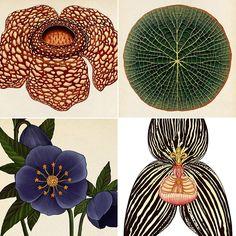 Botanical Illustrations by Katie Scott | Fresh Photons