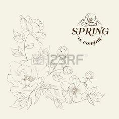Bush of beautiful peonies, ink engraving. Vector illustration. Stock Vector - 28706984