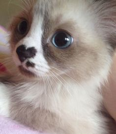 A compilation of the cutest kittens ever to brighten up anyone's day!