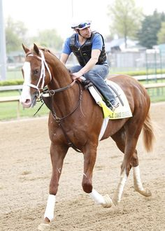 Will Take Charge | 2013 Kentucky Oaks & Derby |