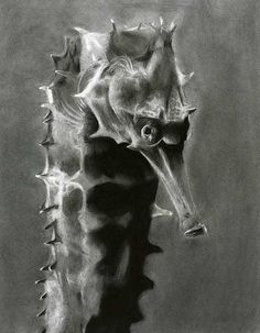 Beautiful and detailed charcoal drawing of a sea horse tail. This piece is part of a series, Kampos Bottom and Sea Nettle. Horse Tail, Folly Beach, Charcoal Drawing, Gaston, Dog Art, Artist At Work, Coastal, Horses, Statue