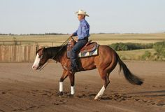 Starting a Reining Spin from Horse | EquiSearch